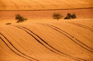 investimento-terreno-agricolo
